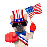 4th oh july dog Stock Image