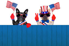 4th oh july row of dogs. French bulldog row of dogs waving a flag of usa on independence day on 4th  of july , isolated on white background, behind a blank empty Stock Photography