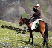 10th Oktober 2013 - stockrider med flocken i Alay berg på betesmark Arkivbilder
