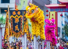 The 14th Tai Kok Tsui temple fair in Hong Kong. HONG KONG - MARCH 04 : Lion dance performance during the 14th Tai Kok Tsui temple fair in Hong Kong on March 04 Royalty Free Stock Photography