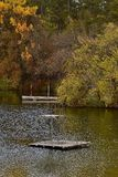 Th told swimming hole with diving board. The raft and diving board from the old swimming hole with the autumn colors in the background stock image