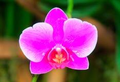 Thaïlande Photographie stock