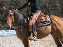 Tha horse with rodeo equipment. Horse with cowgirl  with Rodeo equipment  boots, trousers, saddle Stock Image