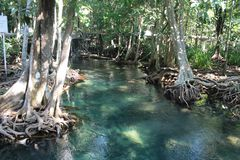 Tha Pom Klong Song Nam, Krabi, Tailandia Imagenes de archivo