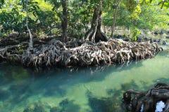 Tha Pom Klong Song Nam, Krabi, Thaïlande Image libre de droits