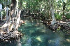 Tha Pom Klong Song Nam, Krabi, Thailand Arkivbilder