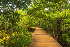 Tha Pom Klong Song Nam Mangrove forest conservation and tourist Royalty Free Stock Photos