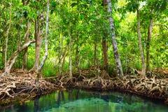 Tha Pom, mangroveskogen i Krabi, Thailand Fotografering för Bildbyråer