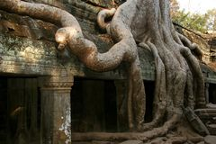 Tha Prohm, Angkor, Cambodia Royalty Free Stock Photography