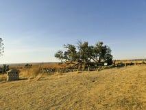 Thaba Bosiu Lesotho arkivbild