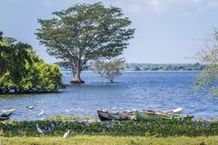 Thabbowa fristad i Puttalam, Sri Lanka Arkivfoton