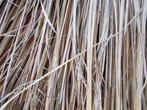 Thached roof covered with cutted dry reed straw.patterns,detail. royalty free stock images