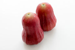 thai äpplerose Arkivbild