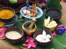 thai örtar Royaltyfri Fotografi