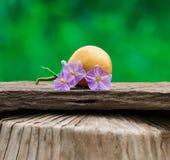 thai aubergine Arkivfoton