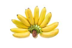 Thai banana Stock Photography