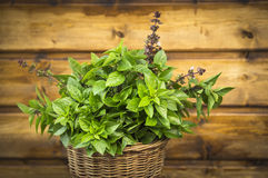 Thai Basil bunch in basket on old wooden Stock Image