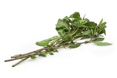 Thai basil or sweet basil used in cooking. Organic Thai basil or sweet basil used in Asian cuisine isolated on white background Stock Photo