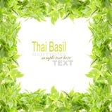 Thai Basil Stock Photography