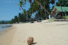 Thai beachfront with coconut. Coconut on beach, with bungalow in shot Stock Photography