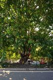 Thai believe in the peepul tree Stock Photo