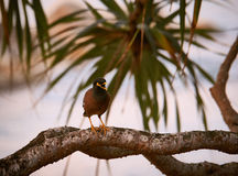 The thai bird. Thai bird sitting on a tree branch Stock Image