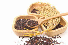 Thai black jasmine rice (Rice berry) Stock Photography