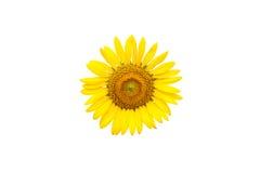 thai blomma Royaltyfria Bilder