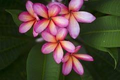 thai blomma arkivbild