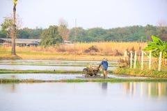 thai bonde Arkivbild
