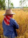 thai bonde Fotografering för Bildbyråer