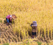 thai bonde Arkivbilder