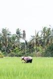 thai bonde Royaltyfri Fotografi
