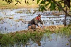 Thai bonde för livstil thai bönder är fiskfälla i risfältfält Royaltyfri Bild