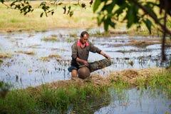 Thai bonde för livstil thai bönder är fiskfälla i risfältfält Royaltyfri Foto