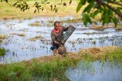 Thai bonde för livstil Thailändska bönder är fiskfälla i risfältfält Fotografering för Bildbyråer