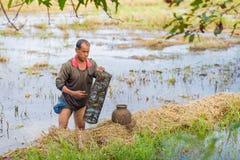 Thai bonde för livstil Thailändska bönder är fiskfälla i risfältfält Arkivfoton