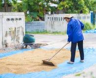 Thai bonde för livstil Torra plantera områden för thailändskt bondebruk till D Arkivfoto
