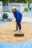 Thai bonde för livstil Torra plantera områden för thailändskt bondebruk till D Royaltyfri Fotografi