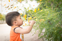 Thai boy smelling flowers Royalty Free Stock Image