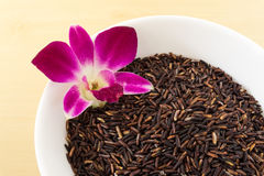 Thai Brown Rice Berry in White Bowl with Orchid Stock Image