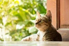 Thai Cat at Door. Thai Cat sitting at Door stock photo