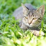 Thai Cat. In the garden stock photos
