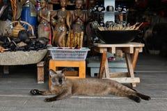 Thai cat lies in gift shop. Thai pussycat lies in gift shop stock photo