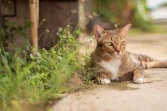 Thai Cat Pattern Royalty Free Stock Image