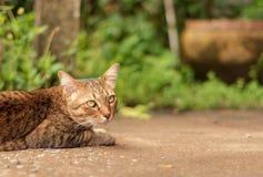 Thai Cat Pattern Stock Image