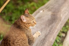 Thai Cat Pattern stock photography