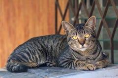 Thai cat. Sleep and seeing stock photo