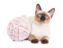 Thai Cat With Woolen Ball Royalty Free Stock Photography