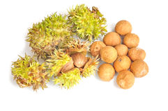 Thai Chestnuts Royalty Free Stock Photo